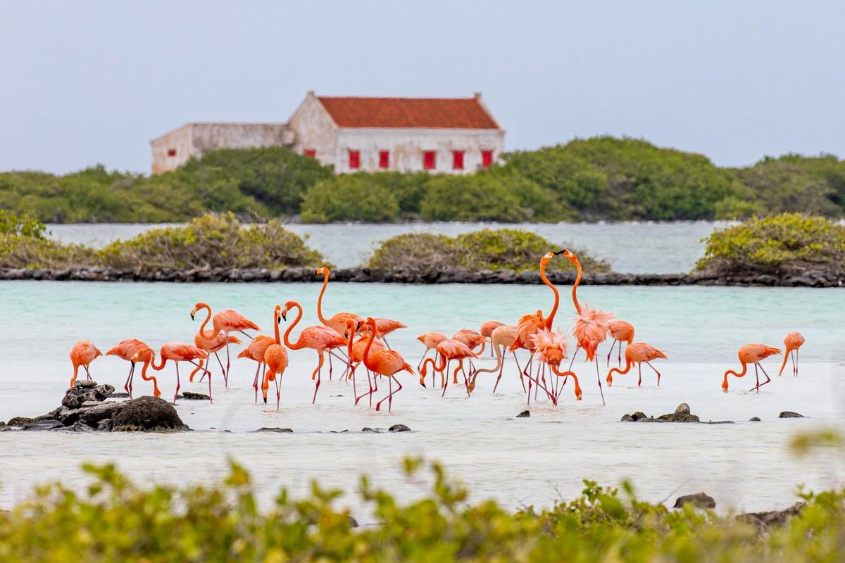 hamlet-oasis-resort-island-impression19