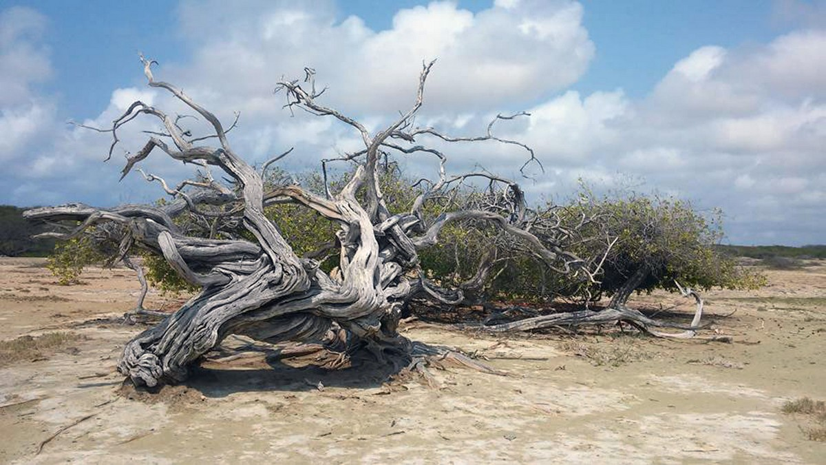 hamlet-oasis-resort-island-impression39
